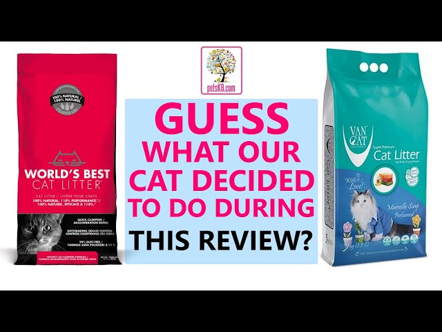Cat litter review with unexpected interruption!