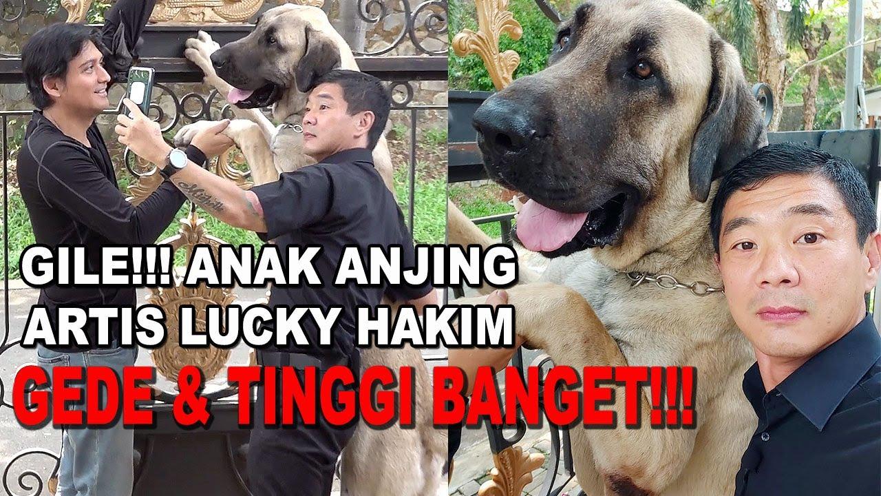 Anjing Lucky