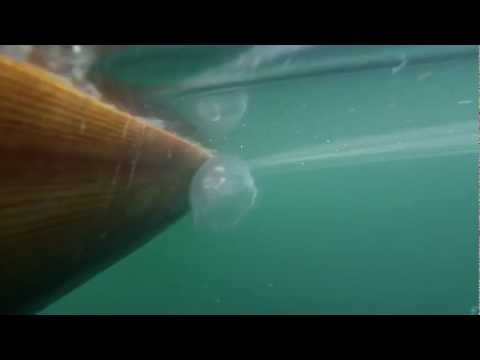 gopro  jelly fish Nanoose bay    Lantzville