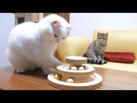 先輩猫の手つきがプロすぎて遊びについていけない子猫!