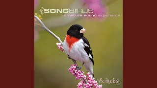 House Finch and Indigo Bunting