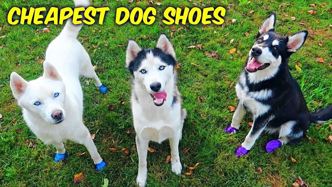 Cheapest Dog Shoes on Amazon