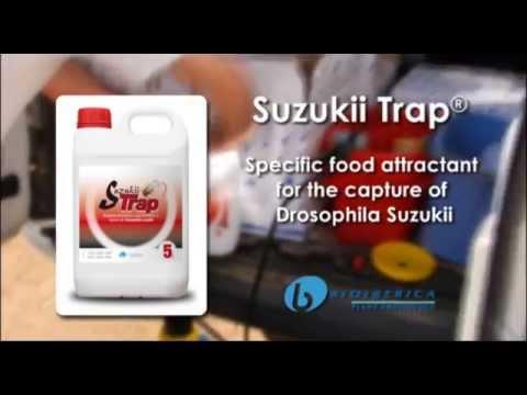 Suzukii Trap®:  Specific food attractant for the capture of Drosophila suzukii