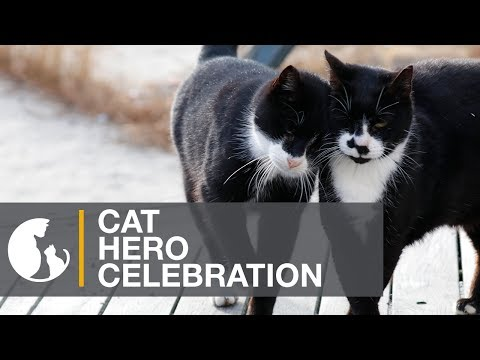 Cat Hero Celebration on the Boardwalk in Atlantic City, NJ