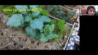 Short presentation: Caring for your kitchen garden + managing pests and disease organically
