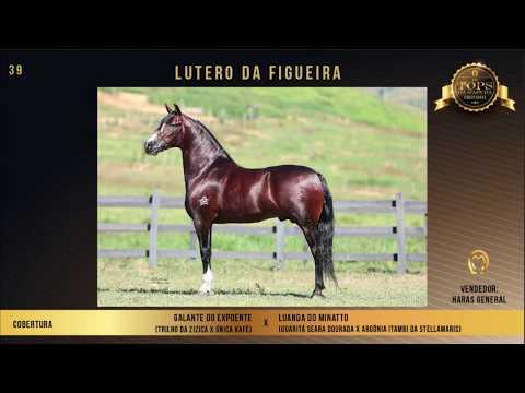 LOTE 39 LUTERO DA FIGUEIRA