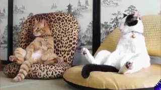 Funny Animals Compilation Try Not to Laugh ►Cute Animals Doing Funny Things