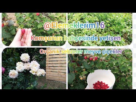 Bahçede organik sebze/ meyve/çiçek/Flower care yetiştirmek