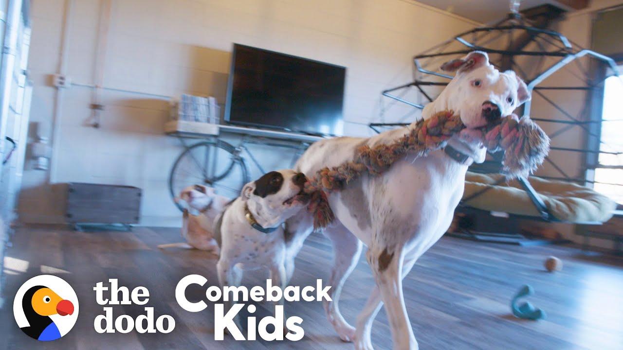 119-Pound Dog With Bad Feet Had To Tiptoe Everywhere — Watch Her Run! | The Dodo Comeback Kids