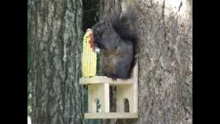 Squirrel Feeder Chair