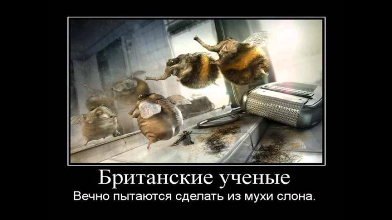 Картинки Демотиваторы Приколы 122177 - YouTube