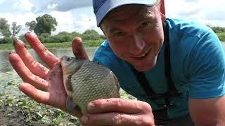 Рыбалка КРУПНЫЙ КАРАСЬ ЩУКА НА УДОЧКУ Ловля рыбы на донку и на удочку Щука на живца