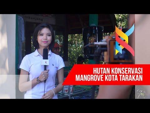 Kaltara TV :  Hutan Konservasi Mangrove Tarakan Kalimantan Utara