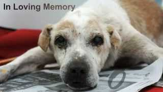 Heartbreaking Story: A Dying Dog