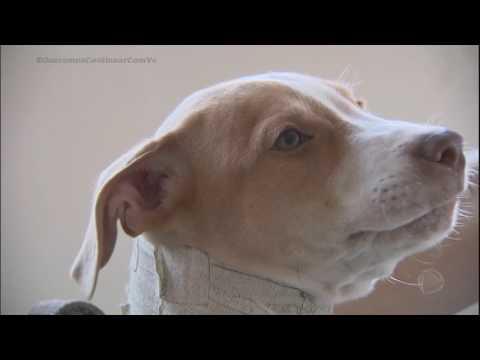 Cãozinho desenganado por veterinários é adotado e ganha nova vida