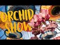 The Chicago Botanic Garden Blooms With Orchids For Its Annual Show | Chicago Botanic Garden