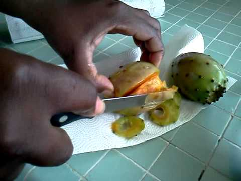 HOW TO EAT AND PEEL A PRICKLY PEAR!!