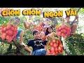 Tony | Lần Đầu Đi Vườn Chôm Chôm - Rambutan Garden