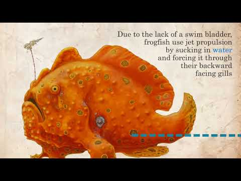 Frogfish Facts In 45 Seconds!