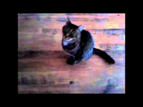 dresser son chat comme un chien episode 1 youtube. Black Bedroom Furniture Sets. Home Design Ideas