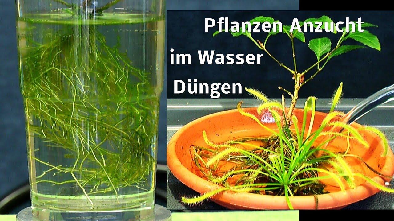 Pflanzen Im Wasser Vermehren Und Heran Ziehen Youtube