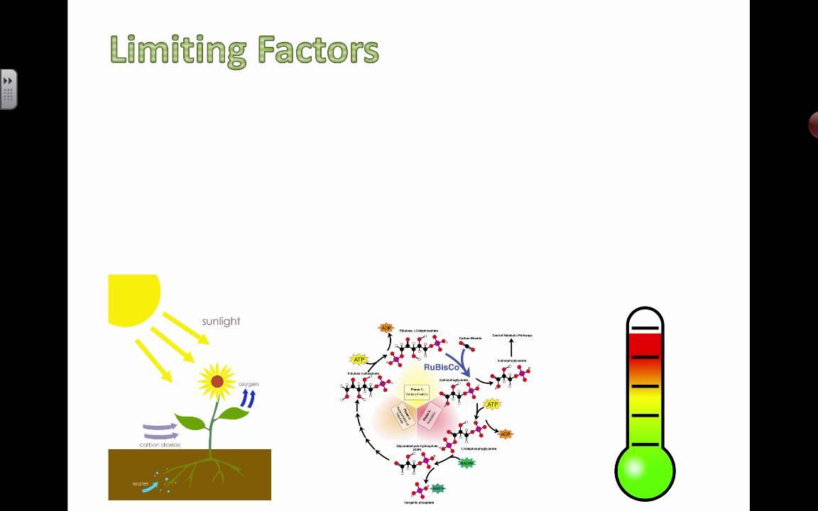 Controlling Limiting Factors (2016) IB Biology - YouTube