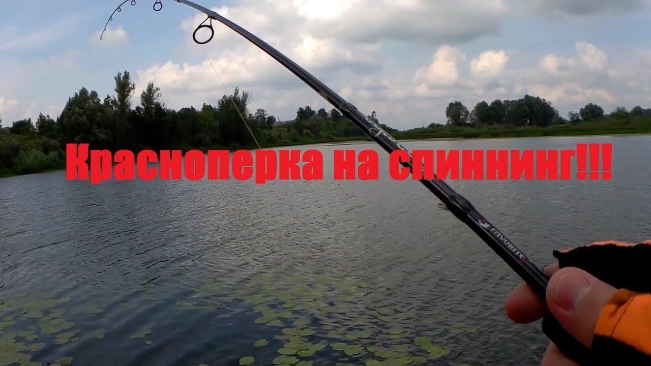 Красноперка на спиннинг! Рыбалка в дождь в черте города.