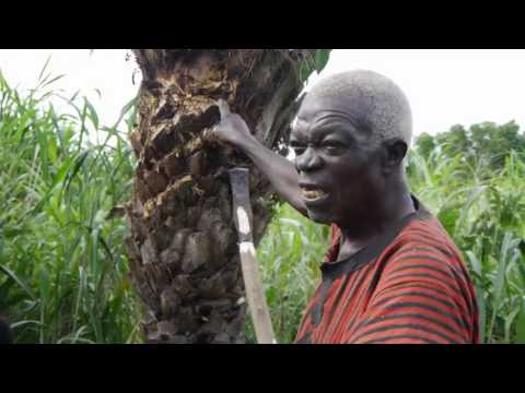 O.N. THE WAY: GHANA: EPISODE 1: PALM WINE