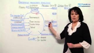 видео бухгалтерские проводки по выплате дивидендов учредителю