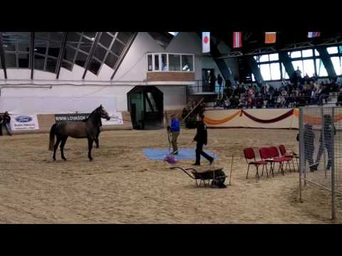 Monty Roberts and Phantom in Hungary