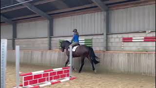 L 2016 Douglas X Poor Boy On the Flat and Jumping with Rider
