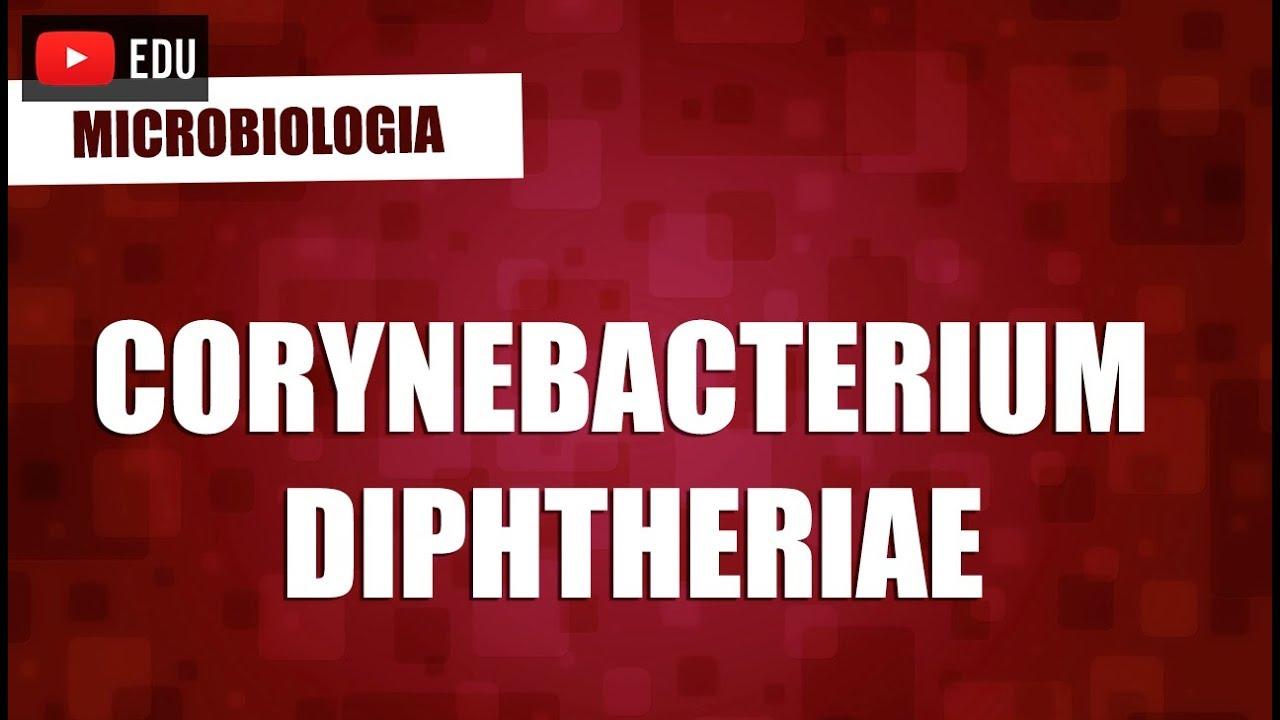 corynebacterium spp kenet férfiakban