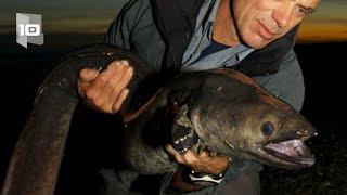 10 Monstruos de río más aterradores. Parte 3