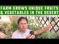 Urban Farm Grows Unique Fruits & Vegetables in the Desert and You Can Too