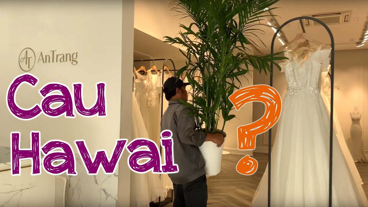 117. Cây Cau Hawai, Trúc Hawai, Cau nước (Phần 1) – Cây cảnh Chợ Hàng