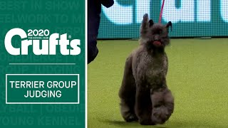 Terrier Group Judging | Crufts 2020