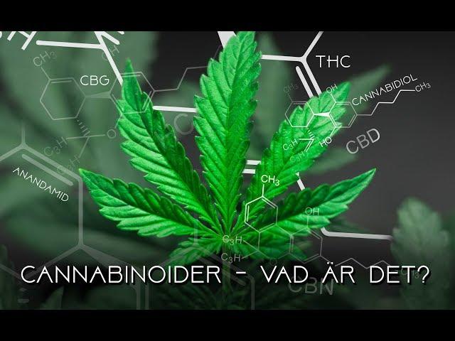 Cannabinoider - Vad är det?