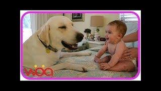 【Psy i niemowlęta】 Niemowlęta i psy Wyjątkowe związki · Psy, które rozśmieszają dziecko każdego dnia
