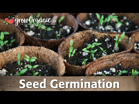 Seed Germination -- Scarification, Stratification, and Soaking