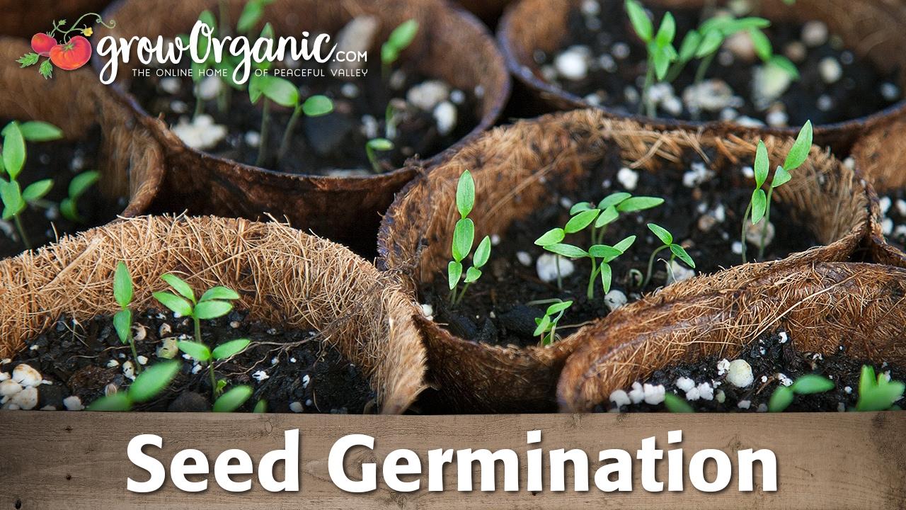 seed germination scarification stratification and soaking organic gardening blog [ 1280 x 720 Pixel ]