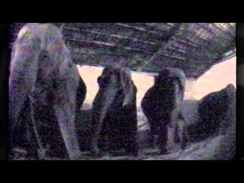 Zoochosis: When Caged Animals Go Crazy