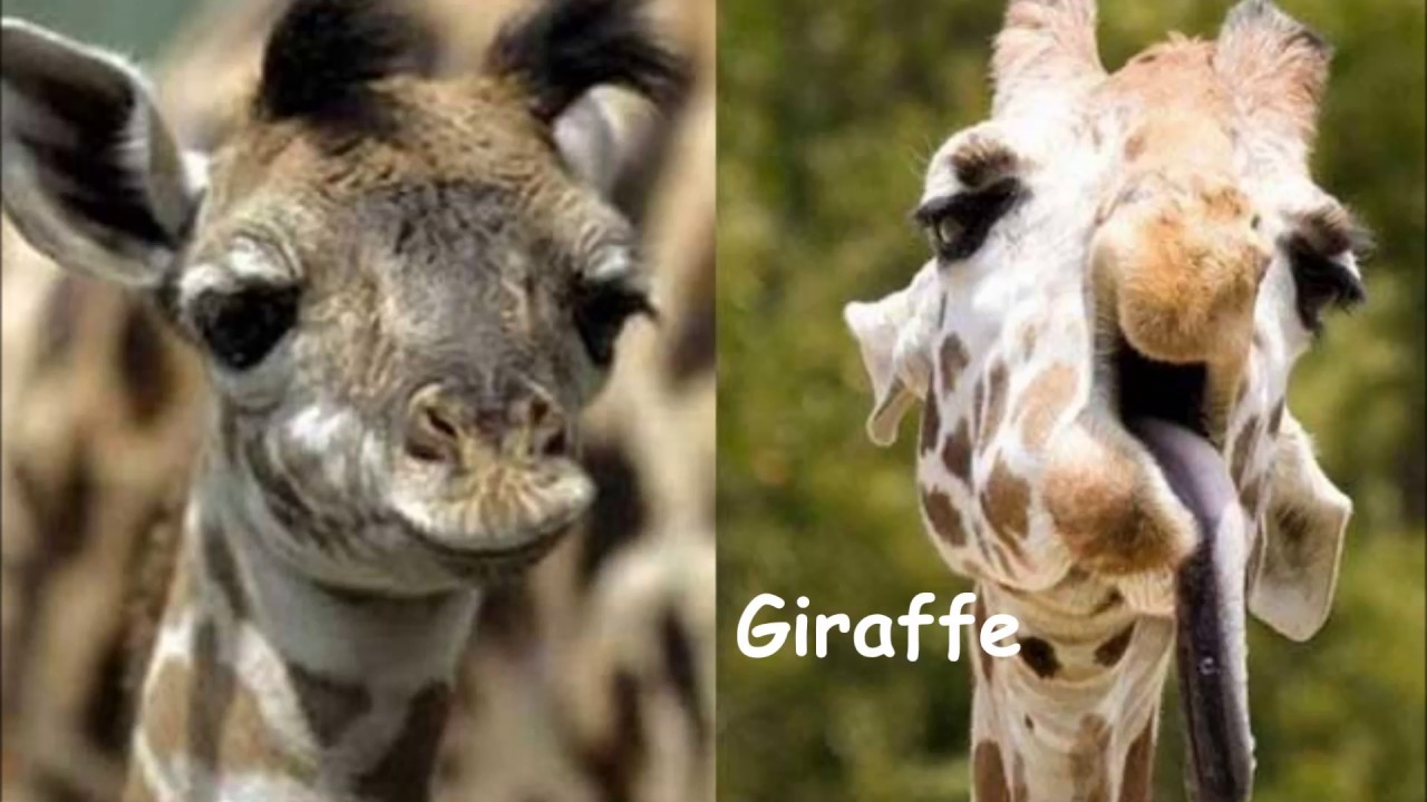 Image of: Amazing Animals With Down Syndrome Youtube Amazing Animals With Down Syndrome Youtube