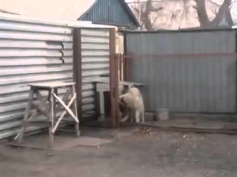 AMAZING: Un perro que baila