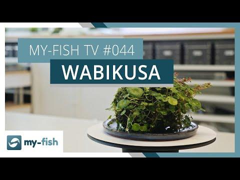 Wasserpflanzen emers in einem Wabikusa halten | my-fish TV
