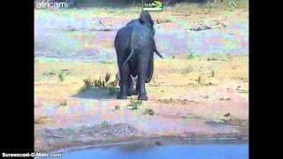 RPA/Afryka - kąpiel słonia - 1.09.12