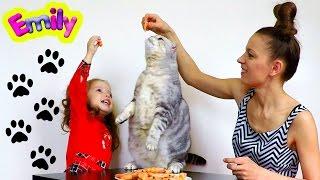 Кошачья вечеринка!) День рождения кота Рони! Кот стоит на задних лапах и кушает из рук креветки!))