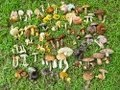 How we identify mushrooms 2.HD