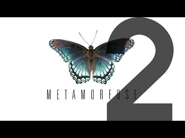 METAMORFOSE - 2 de 4 - Fase 2