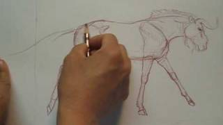 Drawing the Wildebeest Part 2 of 3