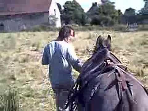 dresseuse mule